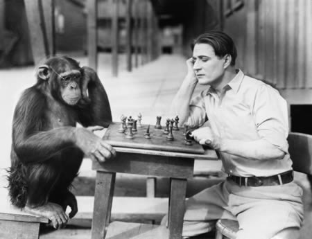 Who hasn't made a monkey of themselves at the chess board from time to time?